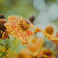 нежный цветок :: Екатерина Рябцева