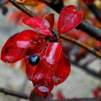 ягода :: Елена Макарова