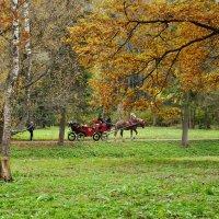 Осенняя прогулка :: Vera Hloponina