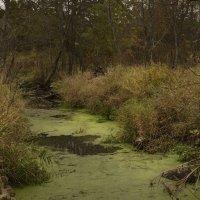 Наша деревенская река. :: Григорий Гурьев