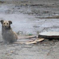 горожанин (или  собачья жизнь...) :: Валерия  Полещикова