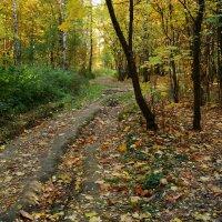 Осень еще временами радует - DSC09130 :: Андрей Лукьянов