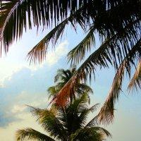 молодая пальма :: Juliya Gapchuk