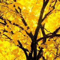 Осенний костер :: Валерий Талашов