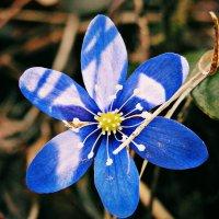 Настроение - весна... :: Полина