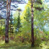 В осеннем лесу :: alemigun