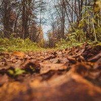 Осенняя дорога :: Andrey Kondor