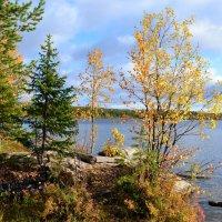 Осенние кружева :: Ольга
