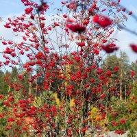 Осень красная :: Евгения Л