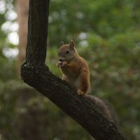 Один из лесных обитателей. :: George Lobanov