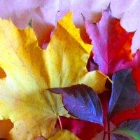 Осенние краски :: Самохвалова Зинаида