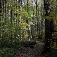 Осенний лес. :: Юлия Ваганова