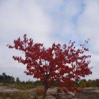 Осенняя палитра :: Марина Сорокина