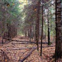 В осеннем лесу :: Татьяна Ломтева