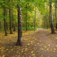Осень уже не понарошку IMG_2248 :: Андрей Лукьянов