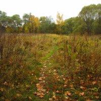 Осень уже не понарошку IMG_2297 :: Андрей Лукьянов