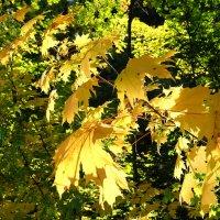 Осенний свет. :: яков боков