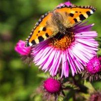 Прекрасные остатки лета... :: Наташа С