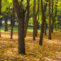 Осенний парк :: Николай Николенко