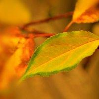Дар природы - осенний листочек.... :: galina tihonova