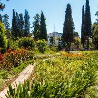 Ботанический сад в Сухуми :: Андрей Гриничев