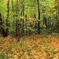 Осень в лесу :: Эркин Ташматов