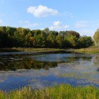 озеро Шехонка :: Борис Грязнов