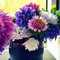 самые поздние цветы :: Ирина Бучева