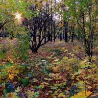 Вечереет в осеннем парке :: Татьяна Ломтева