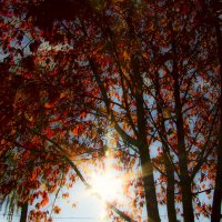 Солнце сквозь ветки деревьев. :: Галина