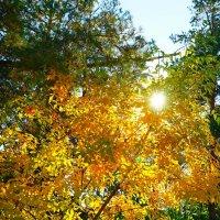 Осенний денек в Волгограде :: Андрей Волгоградский