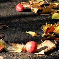 падают яблоки :: Ольга Рывина