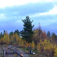Осень на распутье :: Ольга