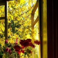 Осень хулиганка на моем окне. :: Надежда Павлючкова