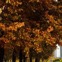 pure autumn :: Alexandr Tarabrin