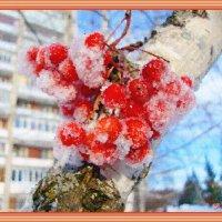 Рябина в снегу :: Лидия (naum.lidiya)