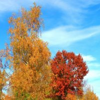 леди Осень :: Orest Zherebetskiy