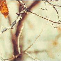 Теплая осень... :: Маргарита Б.