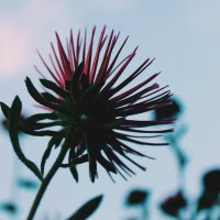 Flower :: Алина Зангиева