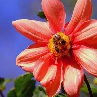 Осенний сбор нектара :: Владимир Голушко