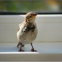 почетный гость) :: linnud