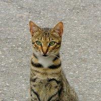 Гагры: местный кот :: Светлана Юрьевна