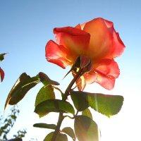 Лучик осеннего солнца :: Irina