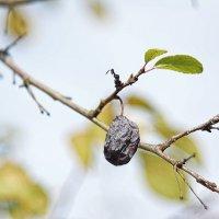 Осень, осень... #3 :: Андрей Вестмит