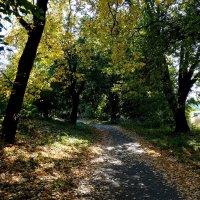 Осень в Ботаническом саду Фото №2 :: Владимир Бровко