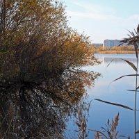 Северодвинск. Осень (1) :: Владимир Шибинский