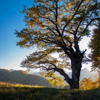 осень :: Евгений Khripp