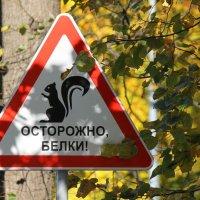 Осторожно, белки! :: Вера Моисеева