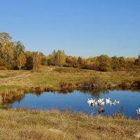 Сельская осень :: Карпухин Сергей