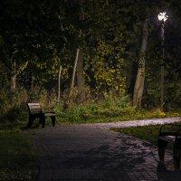 Ночной парк. :: Эдуард Пиолий